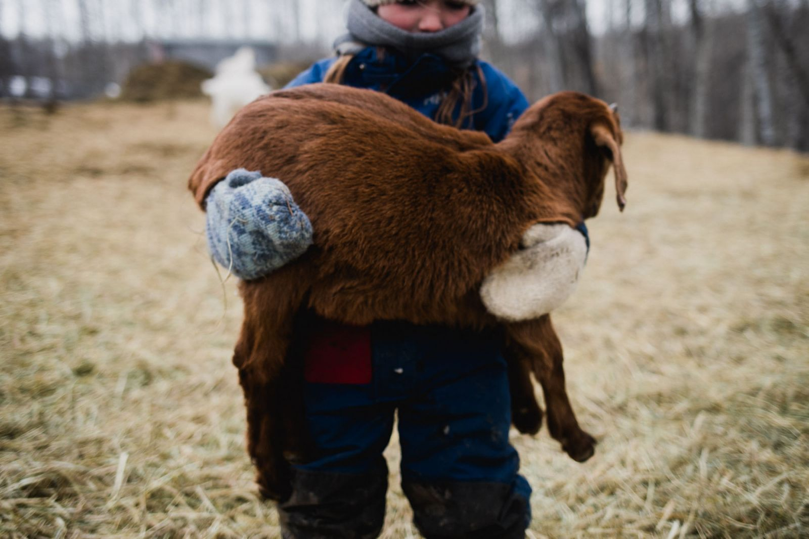 winter farming with kids goat