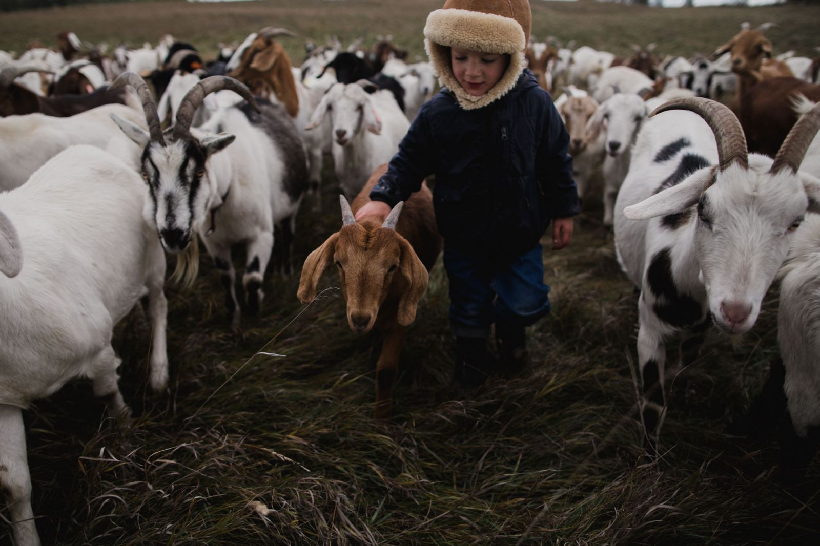alberta goat farm kid